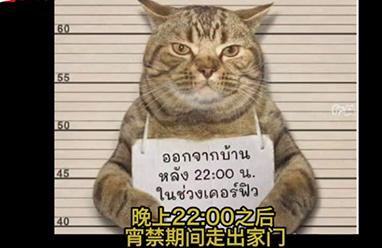 泰国一猫咪违反禁令被捕,网友:一看就知道是惯犯了