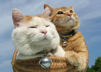 新冠病毒存在猫传猫现象,是否存在猫传人还待进一步研究