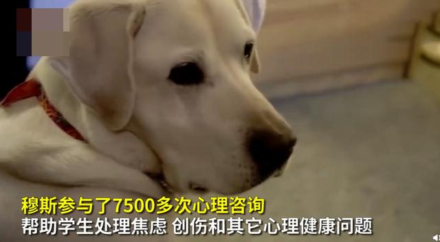8岁治疗犬获博士学位 连狗都博士了你还不努力吗?
