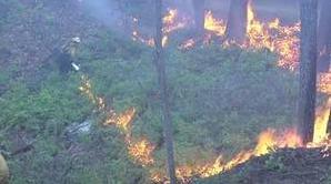 不满待遇消防员8次放火毁林,以身试法被判有期徒刑10年