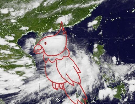 台风鹦鹉登陆广东阳江 风力较小未造成严重灾害