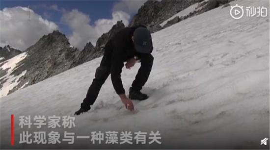 阿尔卑斯山出现粉色冰川是怎么回事?专家:这和全球变暖有关