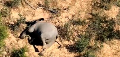 博茨瓦纳数百头大象神秘死亡,死亡前会转圈踱步