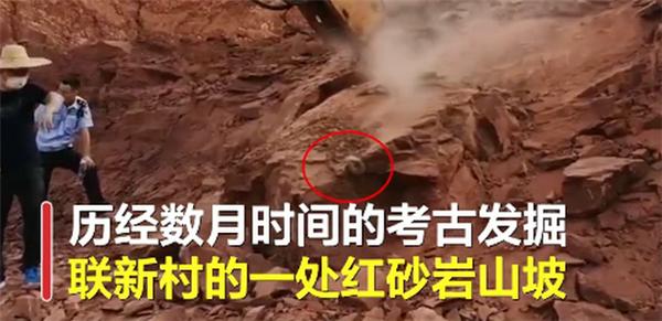 广东河源发掘33枚恐龙蛋化石,馆藏数量再创新纪录