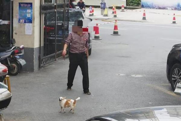 不文明养狗,上海整治不文明养狗行为,上海试点抓拍系统