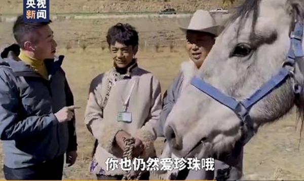丁真得到一匹名叫青龙的赛马,丁真,青龙,珍珠