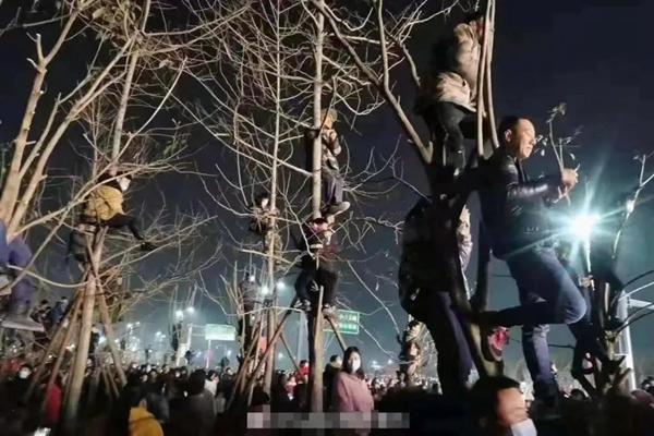 观众为了看潘长江演出爬上树 网友直呼:画面太美不敢看