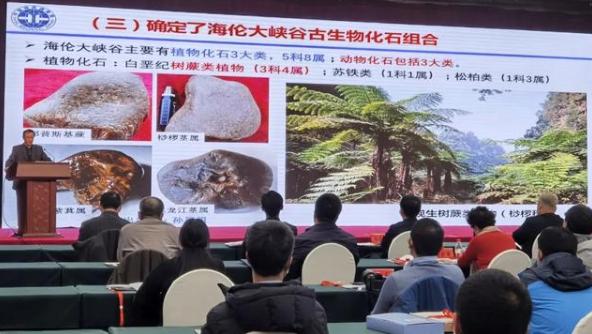 黑龙江发现罕见化石,国内首个白垩纪树蕨茎干化石生物群