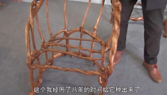 小伙种出天然椅子,天然椅子