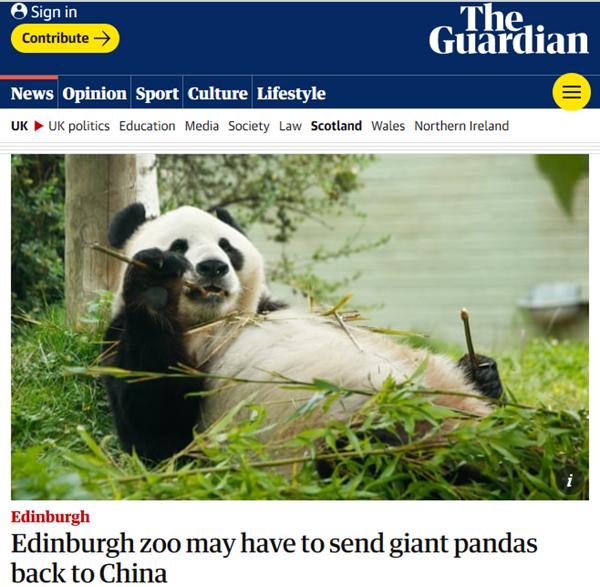 大熊猫,英国大熊猫,英国考虑将大熊猫送回中国