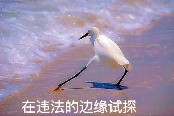 事闹大了!中央政法委批郑爽代孕弃养 普拉达与郑爽终止合作
