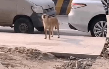 狗子被绝育后跑医院骂街,医生无奈连连道歉