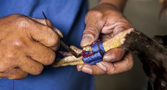 印度公鸡用刀刺死主人,将被送上法庭接受审判