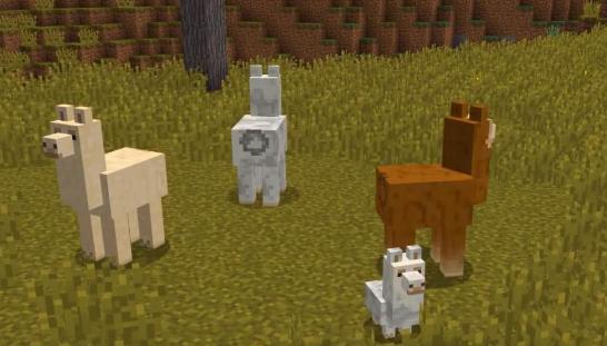 我的世界羊驼怎么繁殖_我的世界羊驼繁殖方法介绍