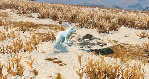 明日之后白兔去哪里抓_明日之后白兔获取攻略