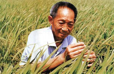 袁隆平在农业杂交水稻上很有作为,提高粮食产量解决了温饱问题