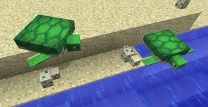 我的世界海龟壳怎么弄_我的世界海龟壳获取攻略