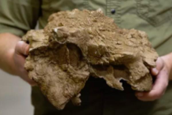 科学家发现恐龙新物种化石