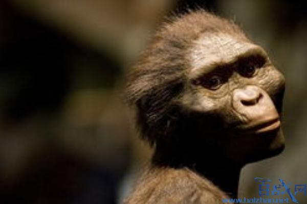 新人类物种现身,新人类物种化石