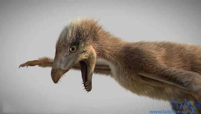 恐龙新物种,有蝙蝠翅膀的恐龙,科学家发现1.63亿年前新恐龙