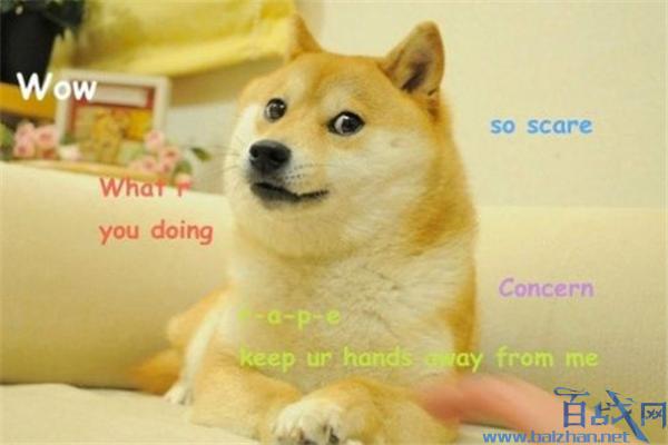 神烦狗doge现状,神烦狗doge几岁了,神烦狗doge动态表情包