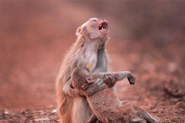 动物界动人的母子情,盘点那些震撼人心的瞬