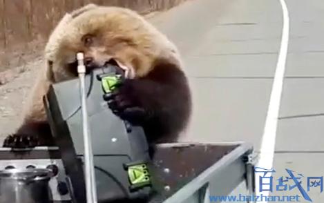 棕熊洗劫猎人食物