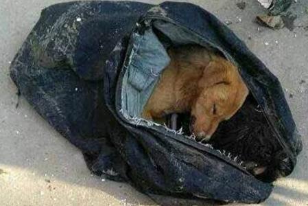 偷狗人被狗主人撞死,被发现时曾用毒针威胁主人别追