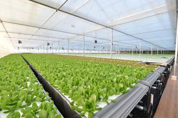 京东自建植物工厂