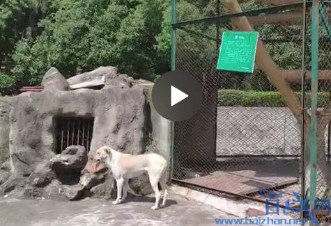 动物园以狗充狼,武汉动物园以狗充狼,以狗充狼