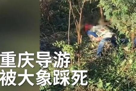 重庆领队被大象踩死
