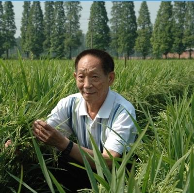 杂交水稻之父袁隆平的资料_袁隆平是哪里人_袁隆平个人简介