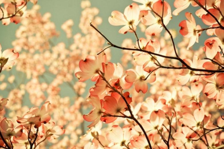 温馨唯美花色物语