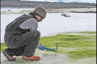 南极洲出现绿雪,全球气候变暖影响正在进一步加剧