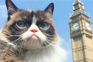 你们的表情包没了,网红动物不爽猫去世
