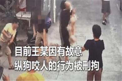 上海一男子故意纵狗咬人被刑拘 涉事犬被强制收容,狗祸实则为人患