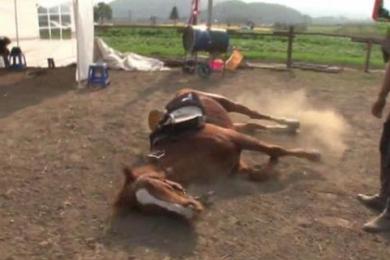 小马被骑就倒地装死,奥斯卡欠它一个小金人
