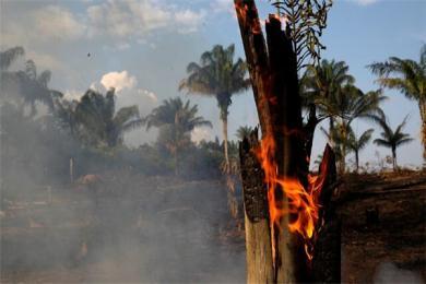 """亚马逊森林为什么总是起火? """"地球之肺""""今年已发生约75000起火灾"""
