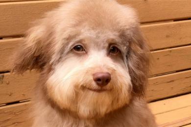 小狗长着一张人脸,还会嘴角上扬自信微笑